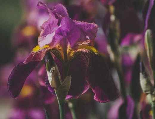 Best Iris Perfumes of 2021